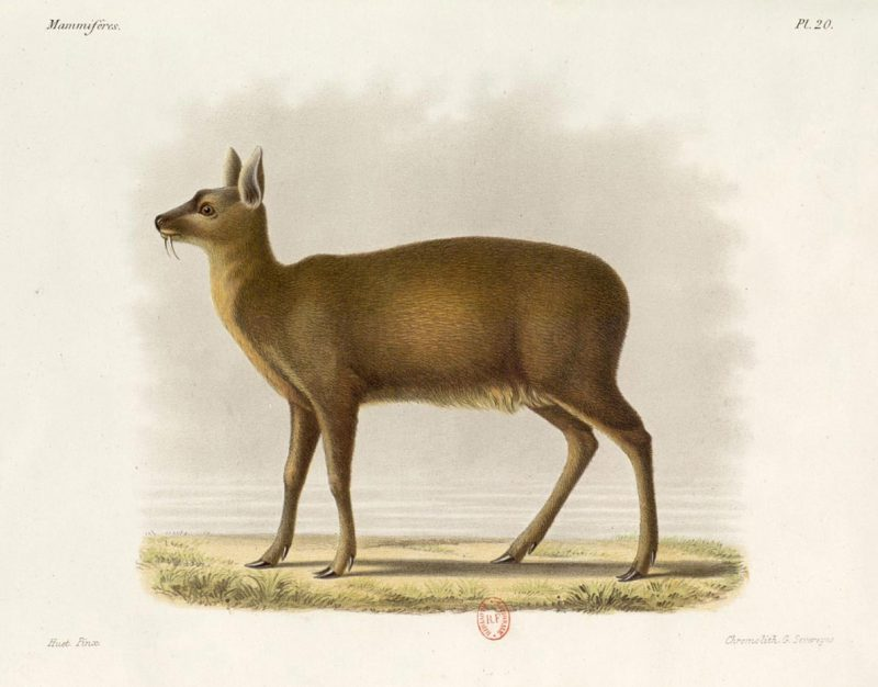 Painting on of a deer looking to the right